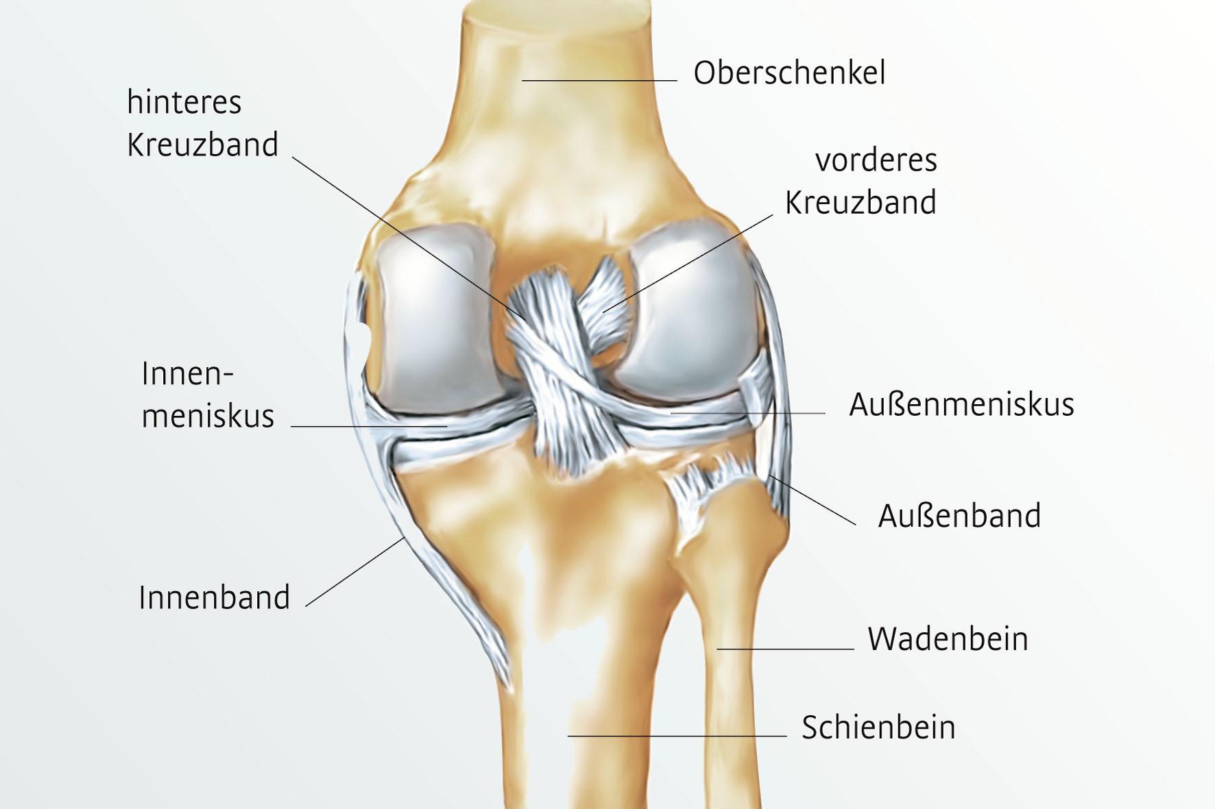 Tolle Knie Knochen Galerie - Anatomie Und Physiologie Knochen Bilder ...