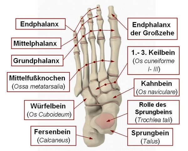 Die Größe des Kernes auf den Fingern der Beine